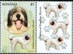 Romania M Shepherd
