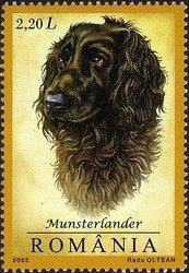 Romania Munsterlander