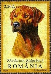 ROMANIA 2005 - RHODESIAN RIDGEBACK