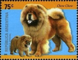 Argentina Chow Chow