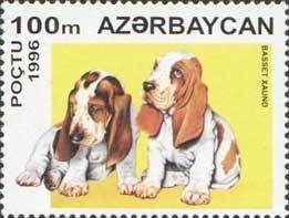 Azerbaijan Basset Hound