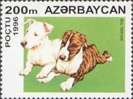 Azerbaijan Bull terrier