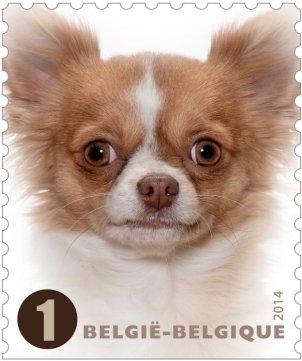 BELGIUM 2014- DOGS