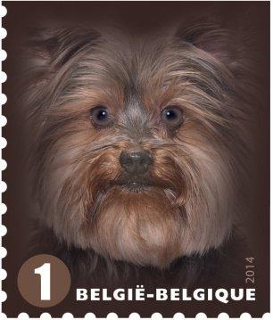 BELGIUM 2014-DOGS