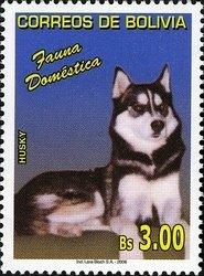Bolivia Siberian Husky