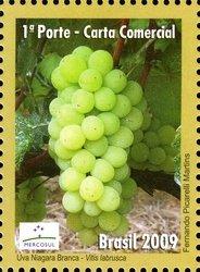 Brazil Grapes2