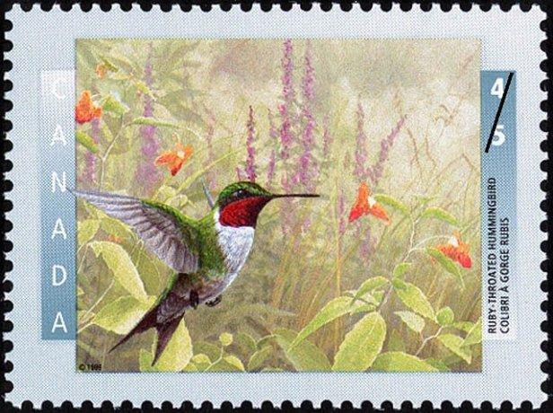 Canada Ruby Hbird