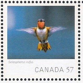 canada rufus hbird