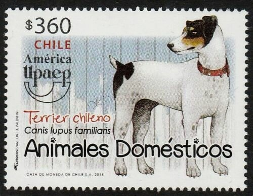Chile Dogs