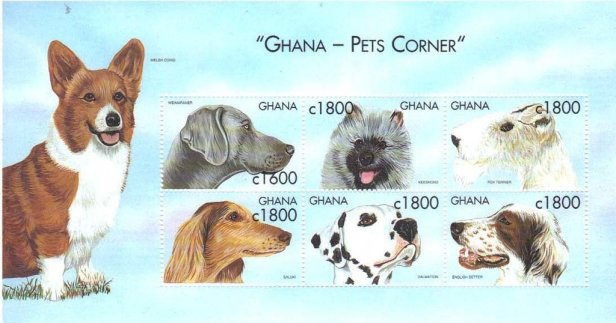 Ghana Dogs