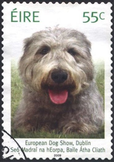 Ireland Eur Dog Show
