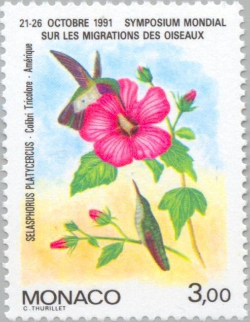 Monaco Hummingbird