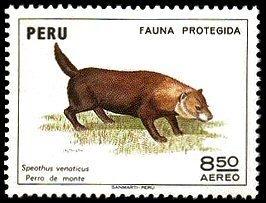 Peru Bush Dog