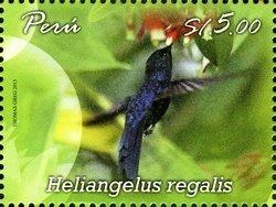 PERU -HUMMINGBIRDS