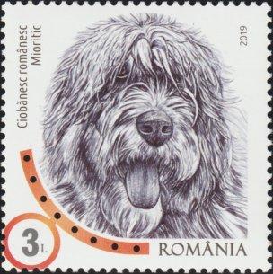 ROMANIA 2019 - DOGS
