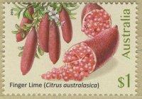 Finger-Lime-Citrus-australasica
