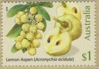 Lemon-Aspen-Acronychia-acidula